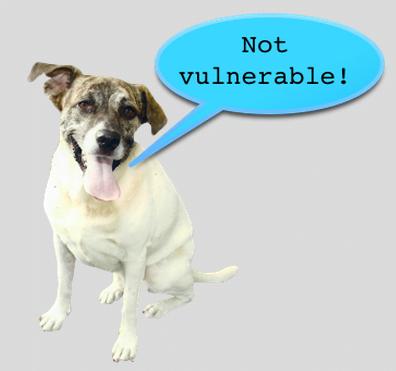 poodle vulerability